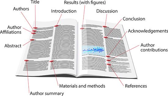 anatomy_paper_diagram3